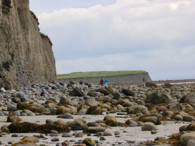 sea foraging with Brian Gannon in Ireland