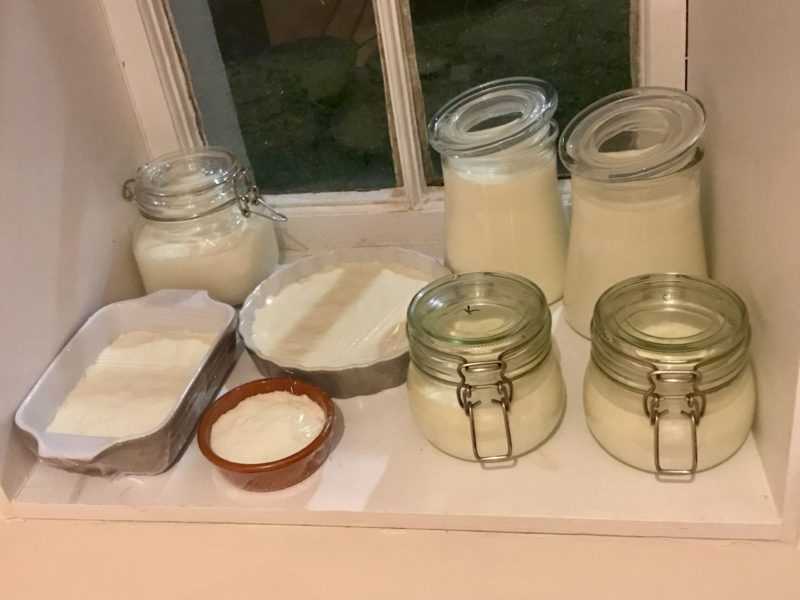Yogurt in Ireland on shelf