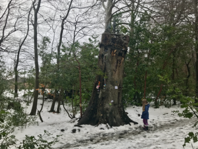 Fairy Tree in Ireland